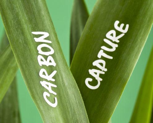 Parhelion carbon insurance