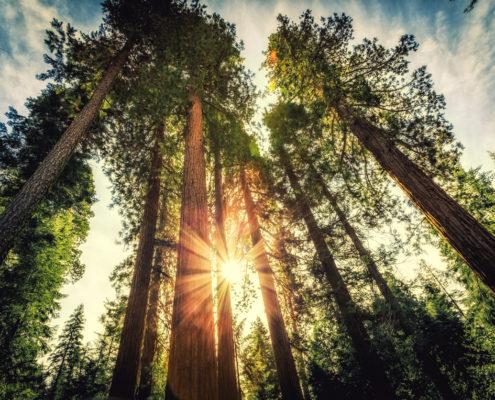 climate insurance carbon Insurance